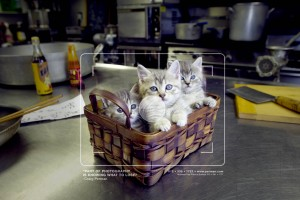 Kitties in Kitchen_workbook 2006 fm